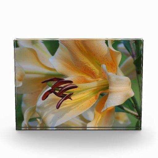 Flores del lirio