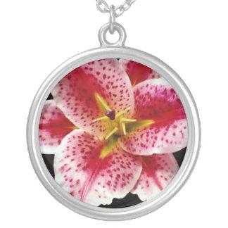 Flores del lirio del Stargazer Collar