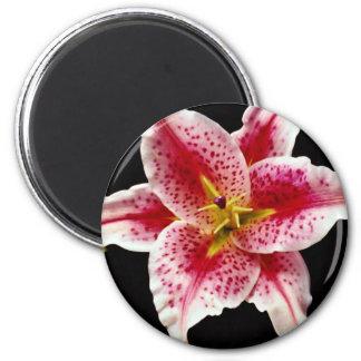 Flores del lirio del Stargazer Iman De Nevera