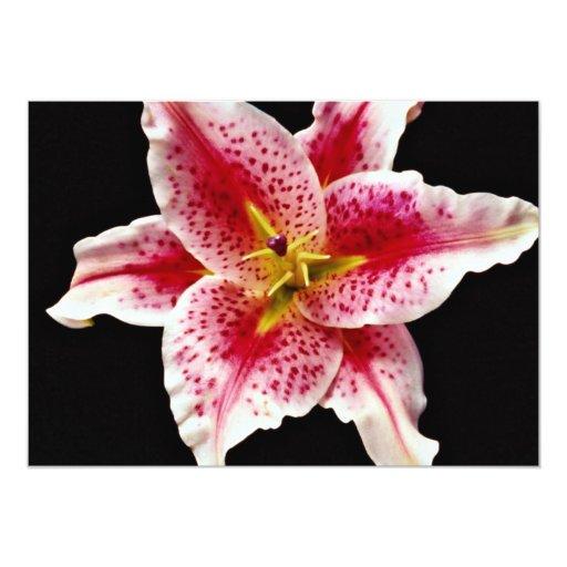 Flores del lirio del Stargazer Invitación 12,7 X 17,8 Cm