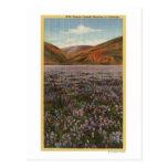 Flores del Lupine de CaliforniaWild en la Postal