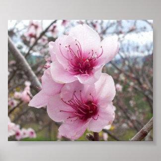 Flores del melocotón impresiones