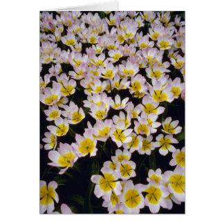 Flores del orgullo de Holanda amarilla Tarjeta De Felicitación