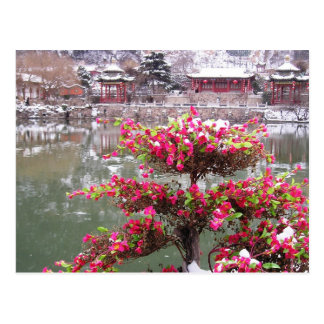 Flores del palacio del invierno tarjeta postal