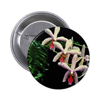 Flores del phalenopsis de la orquídea (Vivian) Pin