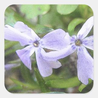 Flores del Phlox del arrastramiento Pegatina Cuadrada