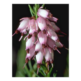 Flores del pico tarjetas informativas