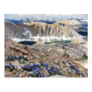 Flores del piloto de cielo, Mt. Whitney, Tarjeta Postal