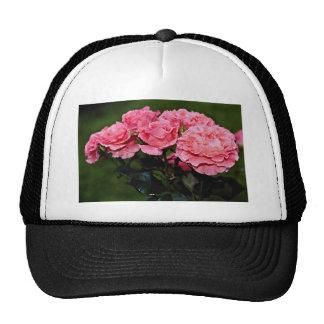 "Flores del ""placer"" de Floribunda Gorro"