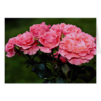 "Flores del ""placer"" de Floribunda Felicitacion"