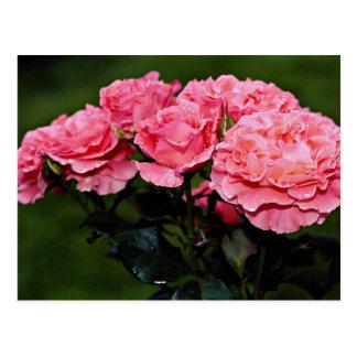 """Flores del """"placer"""" de Floribunda Postales"""