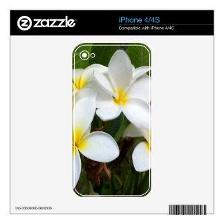 Flores del Plumeria de Hawaii iPhone 4 Calcomanía