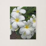 Flores del Plumeria de Hawaii Puzzle