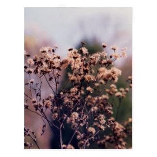 Flores del prado del diseño de Krys Tarjetas Postales