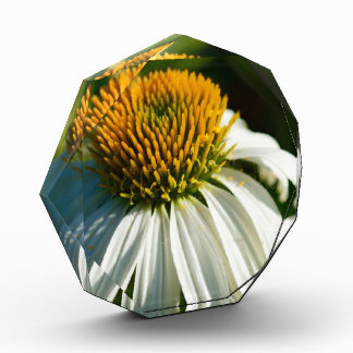 Flores del primer en el Sun (regalo)