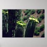 Flores del ramo del cactus del Saguaro Impresiones