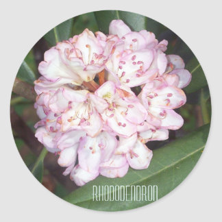 Flores del rododendro de Rosebay Pegatina Redonda