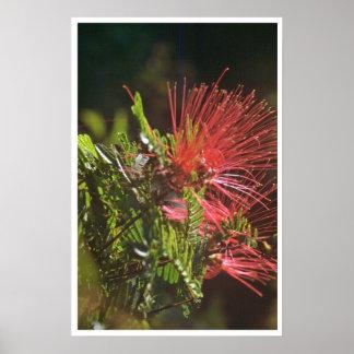 Flores del rojo de Fibred Poster