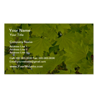 Flores del rojo de la hoja y de los estampados de  plantilla de tarjeta personal