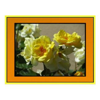 Flores del rosa amarillo tarjeta postal
