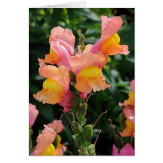 Flores del rosa, anaranjadas y amarillas de Snapdr Tarjeta De Felicitación