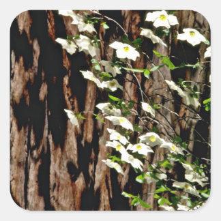 Flores del rosa del árbol del Lago-Dogwood del esp Pegatina Cuadradas Personalizada