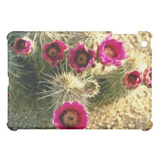 Flores del rosa del cactus de erizo