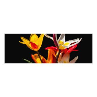 Flores del tulipán contra fondo negro cojinete