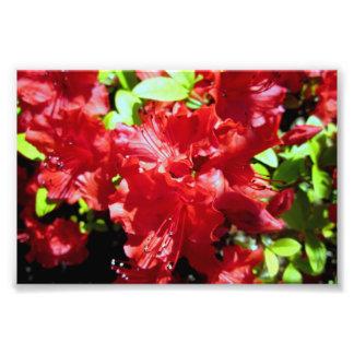 Flores del verano impresión fotográfica