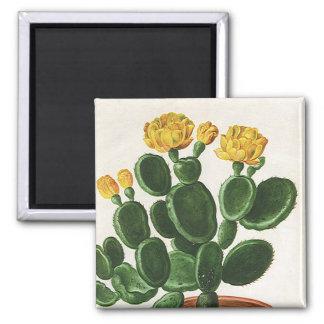 Flores del vintage, cactus del cactus, planta imán