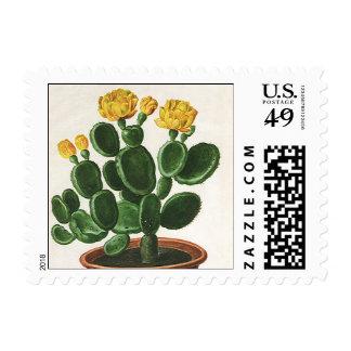Flores del vintage, cactus del cactus, planta franqueo