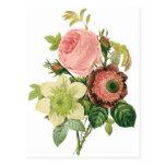 Flores del vintage, Clematis de los rosas de la an Tarjeta Postal