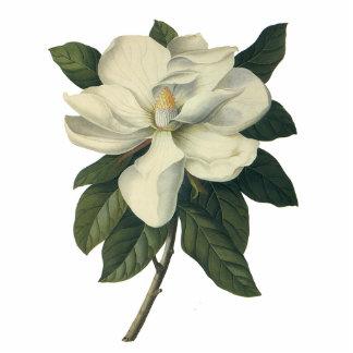 Flores del vintage, flor blanco floreciente de la escultura fotográfica