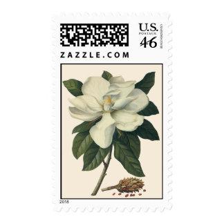 Flores del vintage flor blanco floreciente de la