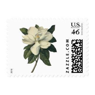 Flores del vintage, flor blanco floreciente de la