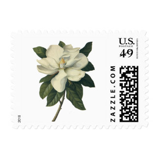 Flores del vintage, flor blanco floreciente de la envio