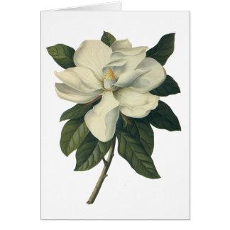 Flores del vintage, flor blanco floreciente de la felicitacion