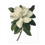 Flores del vintage, flor blanco floreciente de la  postales