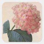 Flores del vintage, jardín rosado del Hortensia Calcomanía Cuadrada