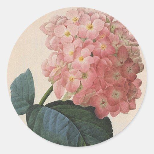 Flores del vintage, jardín rosado del Hortensia Pegatinas Redondas