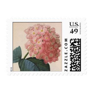 Flores del vintage, jardín rosado del Hortensia Sello