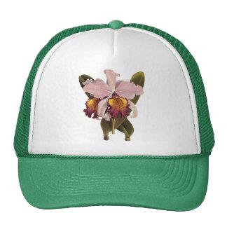 Flores del vintage, orquídea púrpura tropical de gorra