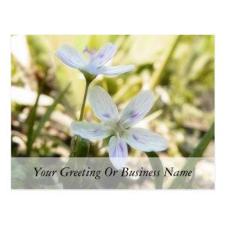 Flores delicadas de la belleza de primavera postal