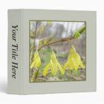 Flores delicadas del Forsythia de la primavera