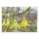 Flores delicadas del Forsythia de la primavera Tarjetas