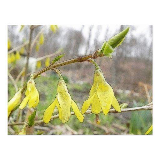 Flores delicadas del Forsythia de la primavera Postales