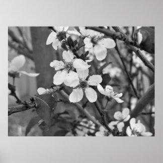 Flores delicados 3623 póster