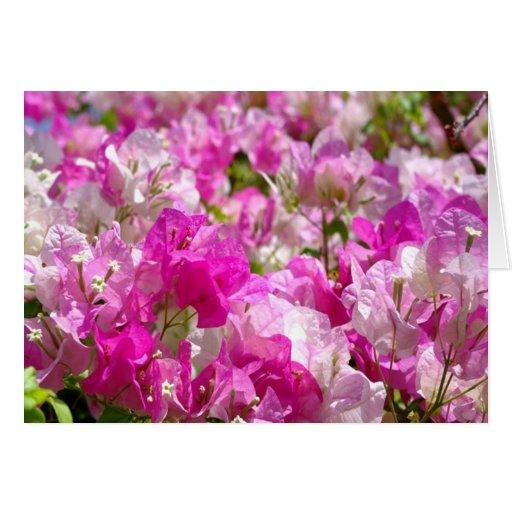 Flores delicados tarjetas