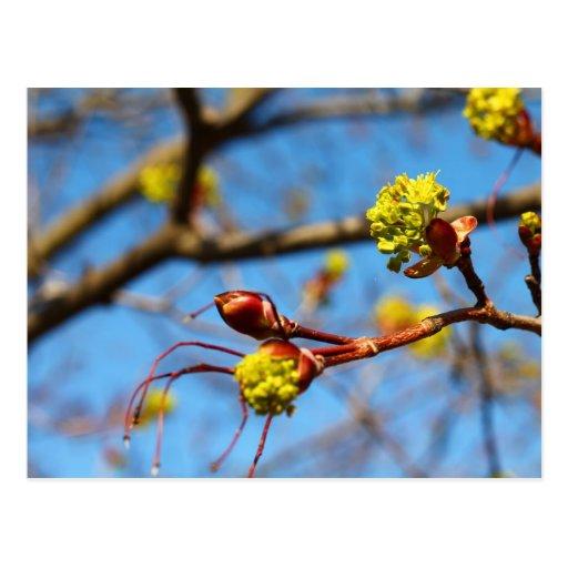 Flores deliciosas tarjeta postal