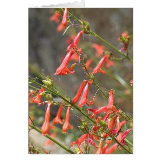 Flores desconocidas, reyes Canyon/secoya Felicitación